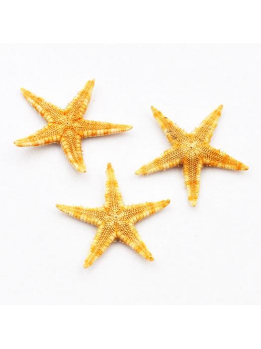 Sea star natura 1-2,5 cm