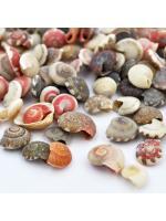 Shell spiral 1g