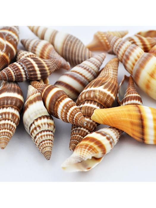Shell burlyWood