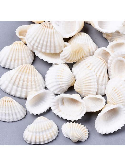 Shell natural